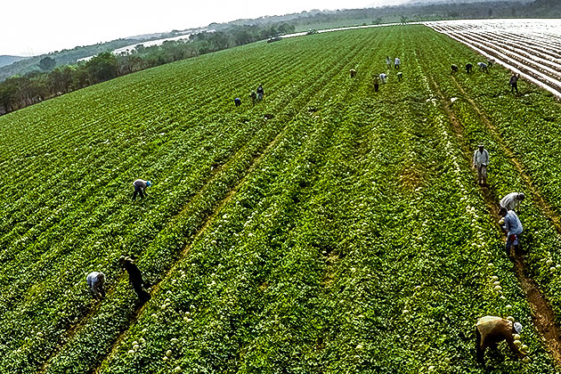 Verde renacer agrícola