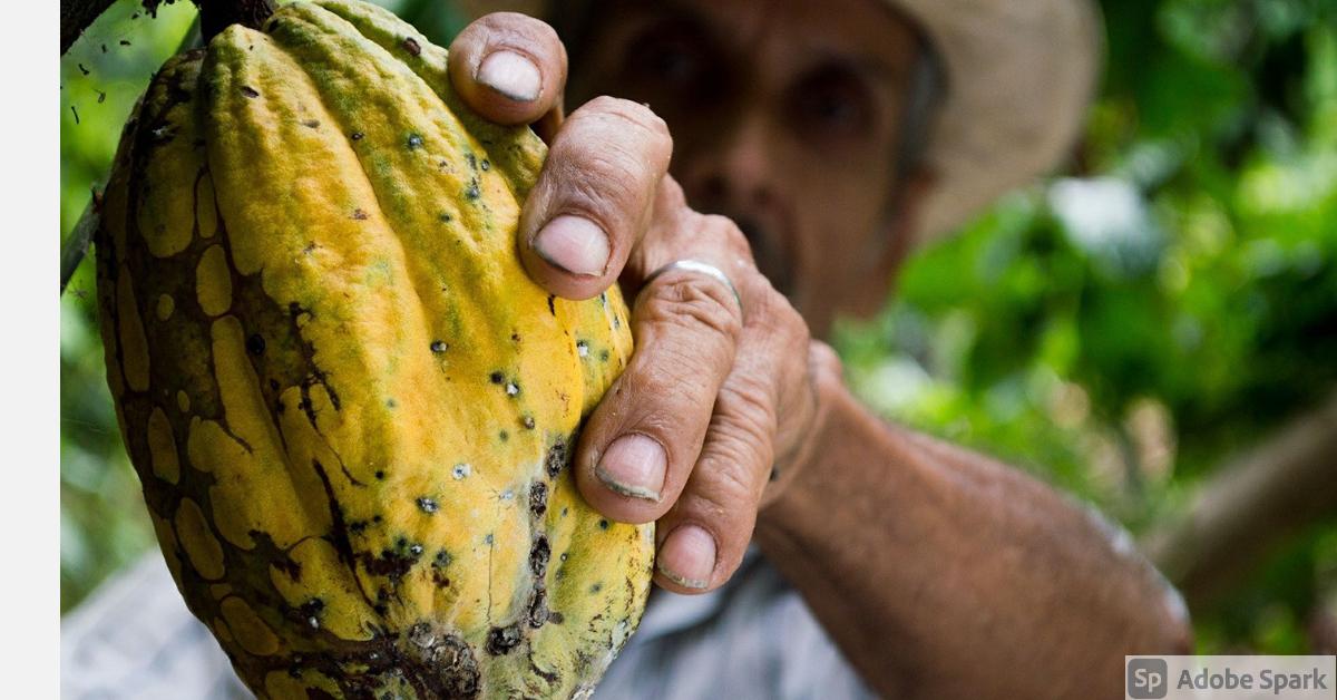 Identifican nueva demanda de productos guatemaltecos para exportar