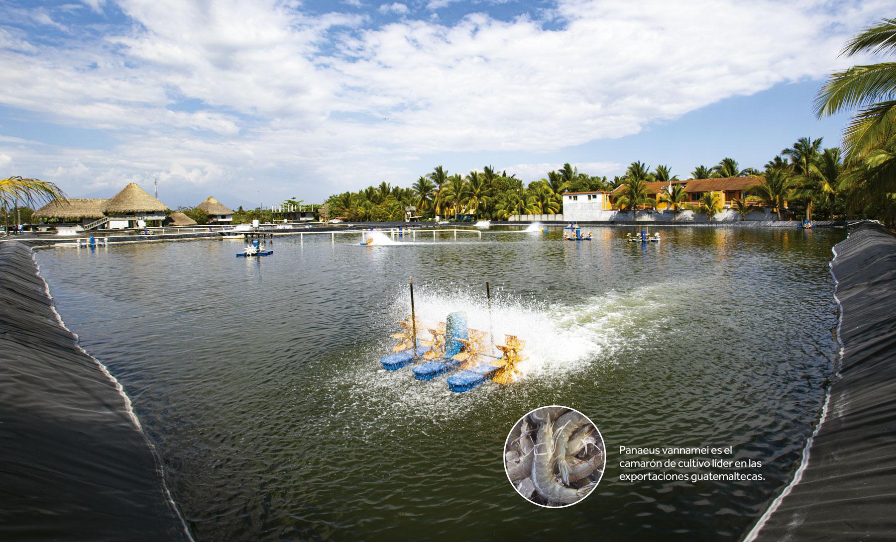 Productos acuícolas y pesqueros agitan la calidad mundial