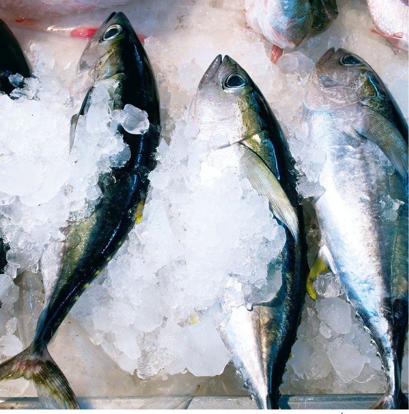 Aquaculture and Fishing Sector, more technical and innovative